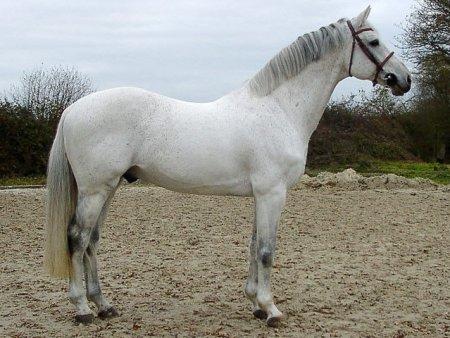 horse_corofino_i-_3big